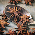 Star Anise 4808 By Tl Wilson Photography by Teresa Wilson