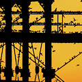 Starlings At Golden Hour On Aberystwyth Pier by Keith Morris starlings photographs