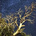 Stars Light Up Arizona Sky by Chance Kafka