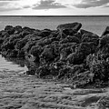 Stay Of The Rocks - Breach Inlet by Dale Powell
