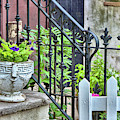 Stoop Fun by JAMART Photography