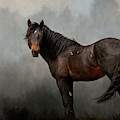 Stormy by Mary Hone