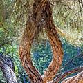 Strange Tree by Kate Brown