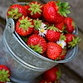 Strawberries And Daisies by Top Wallpapers