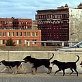 Stray Dogs Stroll Along The Bruckner by New York Daily News Archive