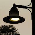 Street Lamp by Raymond Earley
