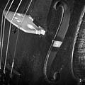 Strings Series 46 by David Morefield