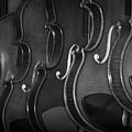 Strings Series 51 by David Morefield