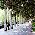 Strolling The Burgos Boulevard by Rick Locke