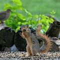 Strong Fox Squirrel by Dan Friend