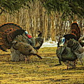 Strutters And Hens by Dale Kauzlaric
