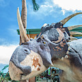 Styracosaurus  by Tony Baca