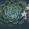 Succulent Film Fade Fl by Edward Fielding