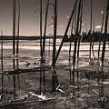 Sulfur Field by Mae Wertz