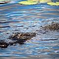 Summer Alligator by Cynthia Guinn