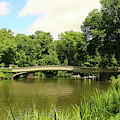 Summer Day In Central Park  by Christiane Schulze Art And Photography