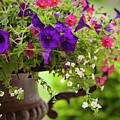 Summer Flowers In Cast Iron Urn by Brian Jannsen