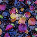 Summer Leaves by Az Jackson