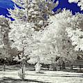 Summer Park In Infrared by Steve Harrington