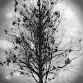 Summer Tree In Black And White by Debra and Dave Vanderlaan