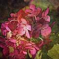 Sun Bleached Red 5240 Idp_2 by Steven Ward