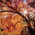 Sun Peaking Through The Autumn Colors  by Saija Lehtonen