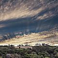 Sun Rays by Tran Boelsterli