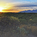 Sun Setting Over Cholla And Catalinas  by Chance Kafka