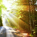 Sunflare On Road by Thomas Northcut