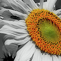 Sunflower And Shy Friend by Smilin Eyes  Treasures