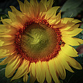 Sunflower And Visitor by William Norton