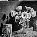 Sunflower Arrangement Bw by Susan Candelario