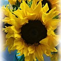 Sunflower Digital Painting  by Carol Groenen