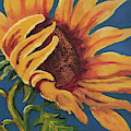 Sunflower by Linda Anderson