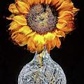 Sunflower Still Life by JC Findley