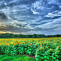 Sunflower Sunset 7 The Iron Horse Farm U G A Greene County Georgia Art by Reid Callaway