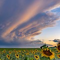Sunflowers And Storm Clouds by Rand