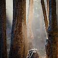 Sunlight by Alexander Fedin