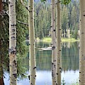 Sunlight On The Lake by Tammie J Jordan