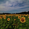 Sunny Faces In New Hampshire by Jeff Folger