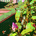 Sunny Like Florida by Joy McKenzie - Abbie Shores