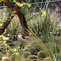 Sunnyland Gardens Scene Palo Brea In Foreground by Colleen Cornelius