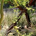 Sunnyland Gardens Scene Palo Brea In Foreground In Portrait by Colleen Cornelius