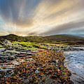 Sunrays At Dawn Along The Coast by Debra and Dave Vanderlaan
