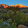 Sunrise At Mount Whitney From Tuttle Creek by David Thompson