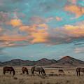 Sunrise Beauty by Kent Keller