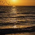 Sunrise Birds Nc by Robert Moorhead