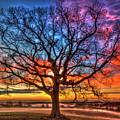Sunrise Oak Soli Deo Gloria Glory To God Alone Ga Farming Landscape Art by Reid Callaway