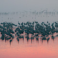 Sunrise Over The Hula Valley by Dubi Roman