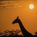 Sunrise Over The Etosha National Park, Namibia by Lyl Dil Creations